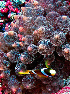 Fish and reef off Nusa Lembongan, Bali. Image by Ilse Reijs and Jan-Noud Hutten, Flickr