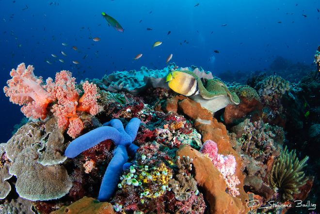 Fish and reef off Nusa Lembongan, Bali. Image by Stephane Bailliez, Flickr