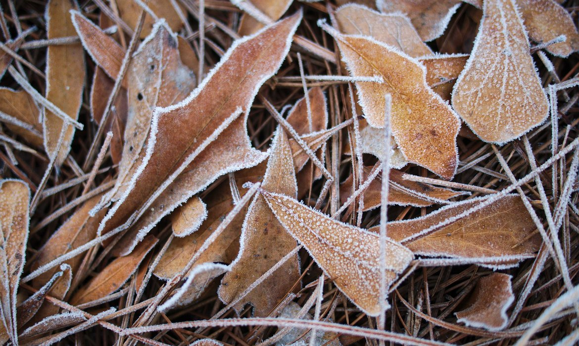 frost on leaves, winter solstice morning photographed by luxagraf