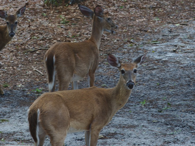 deer, fargo, ga photographed by luxagraf