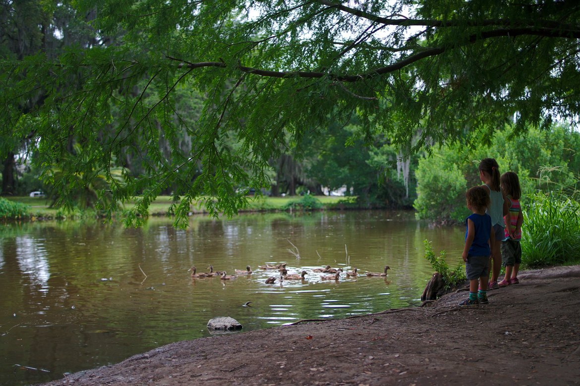 ducks in city park, New Orleans photographed by luxagraf