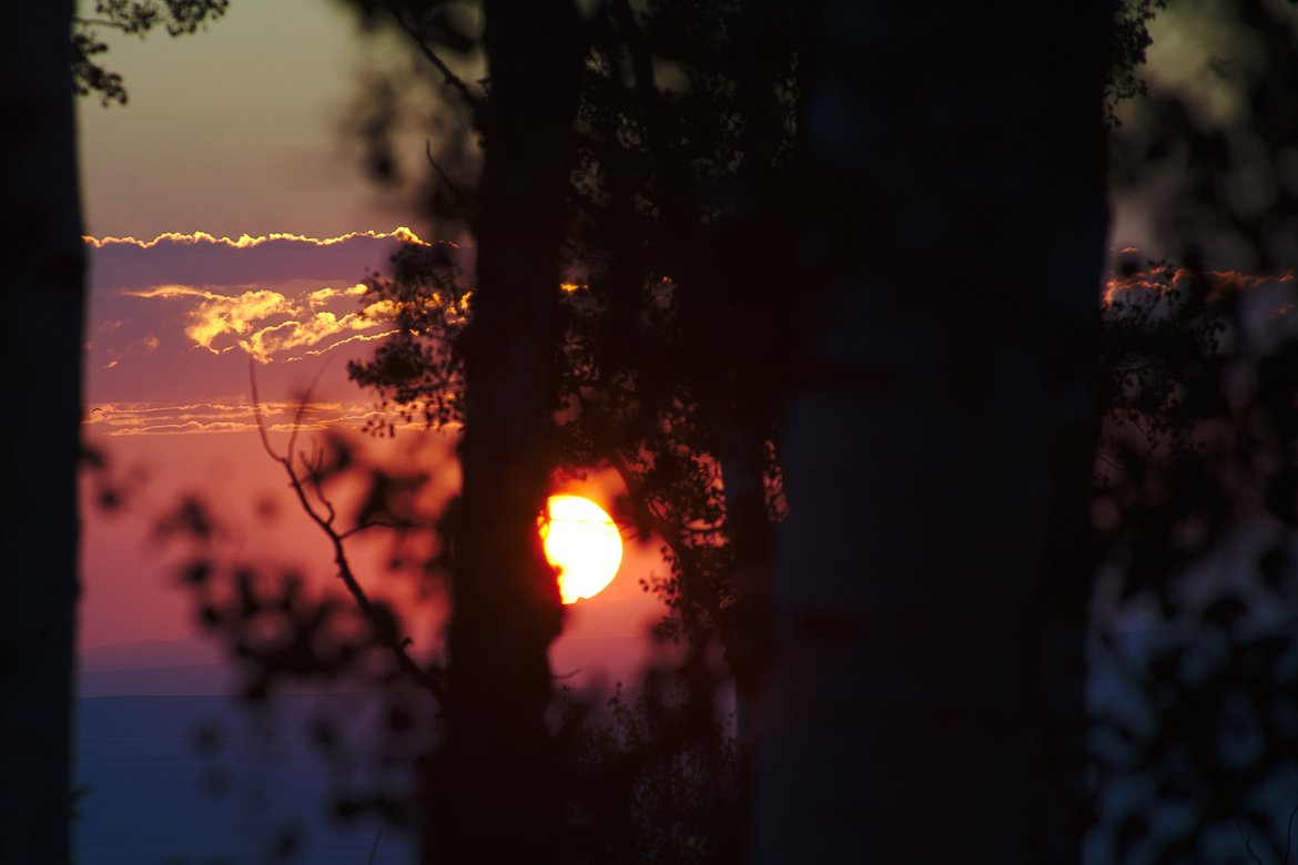 Sunset through the trees photographed by luxagraf