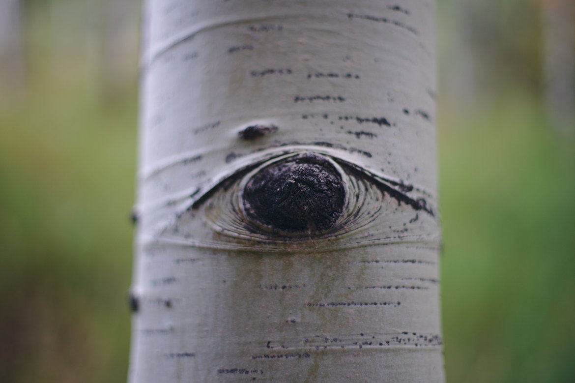 tree eye photographed by luxagraf