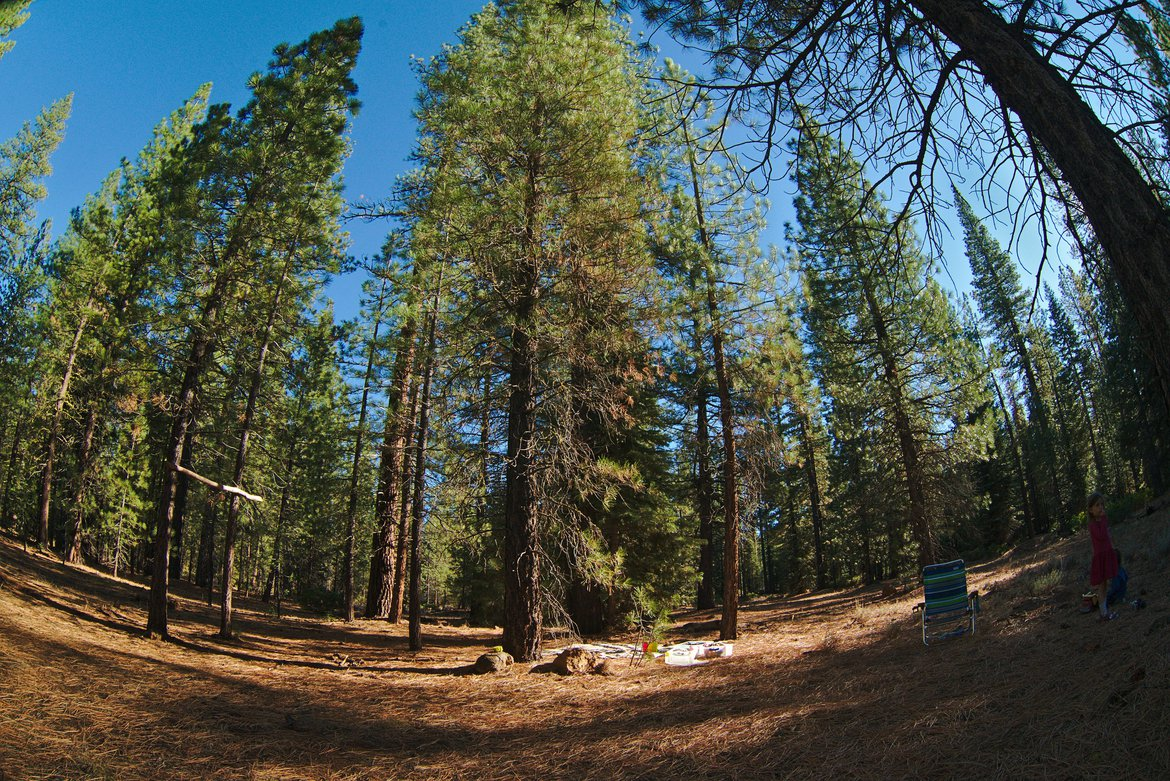 fisheye forest photographed by luxagraf