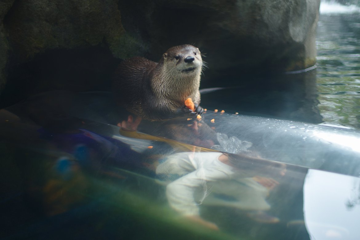 otter photographed by luxagraf