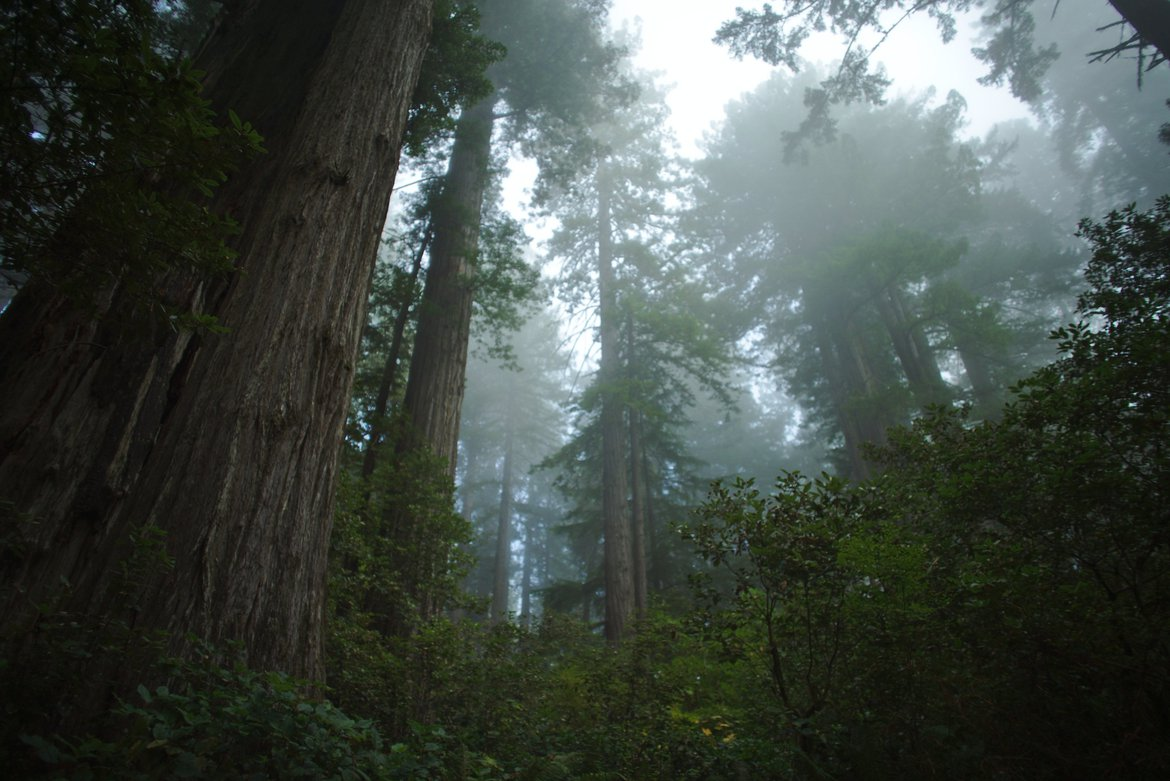 redwoods photographed by luxagraf