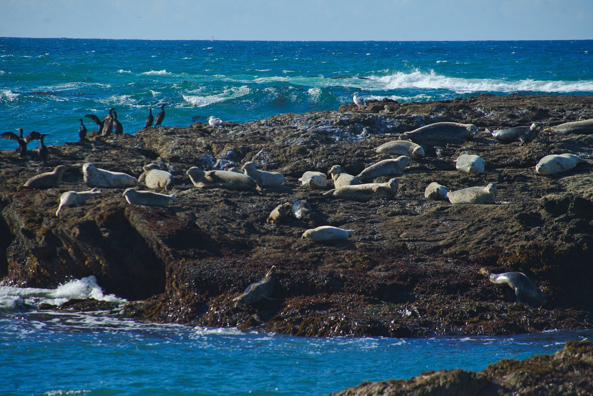 harbor seals photographed by luxagraf