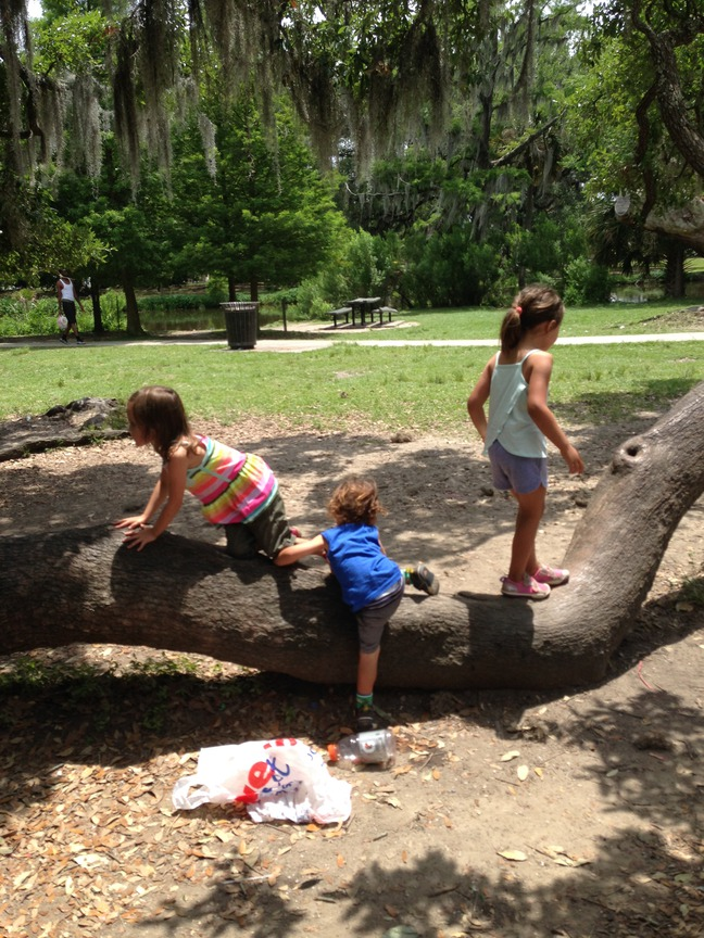 climbing a tree, city park, new orleans photographed by luxagraf