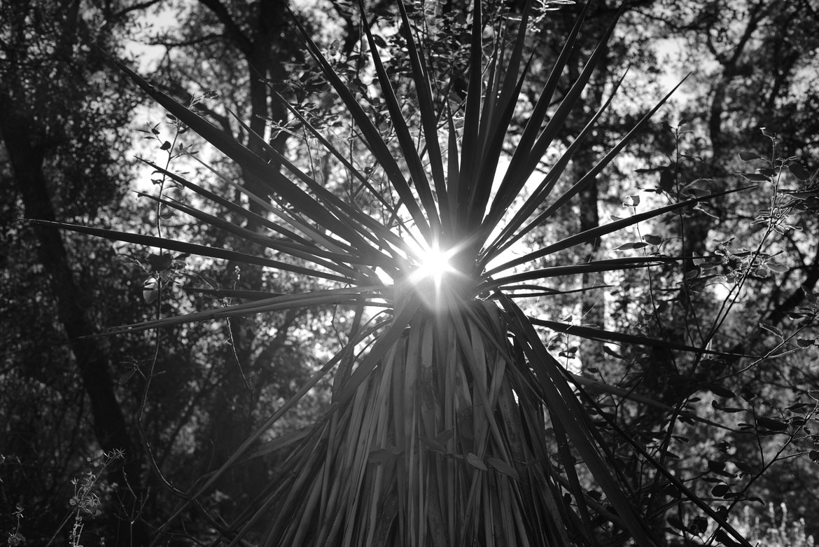 yucca, cochise stronghold photographed by luxagraf