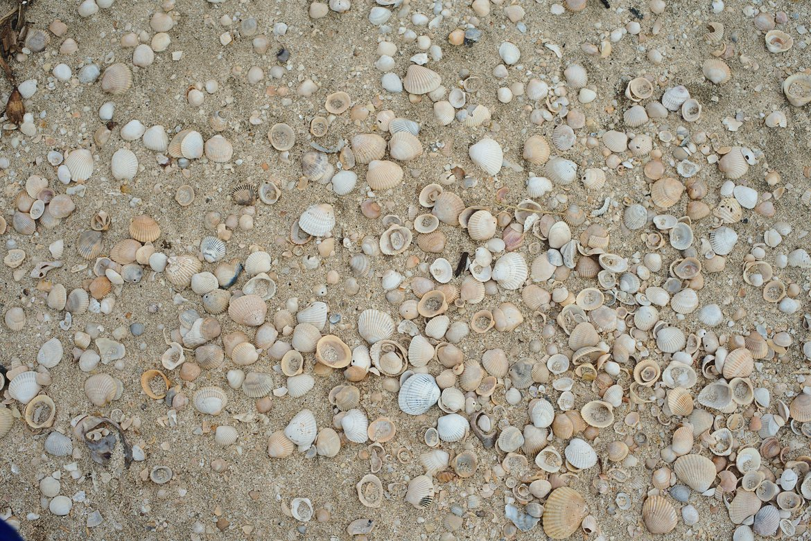 Shells of rutherford beach photographed by luxagraf