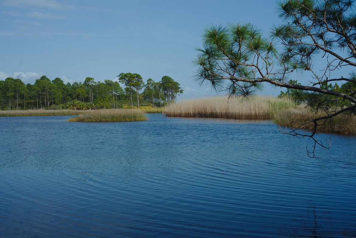 grayton beach state park, florida photographed by luxagraf