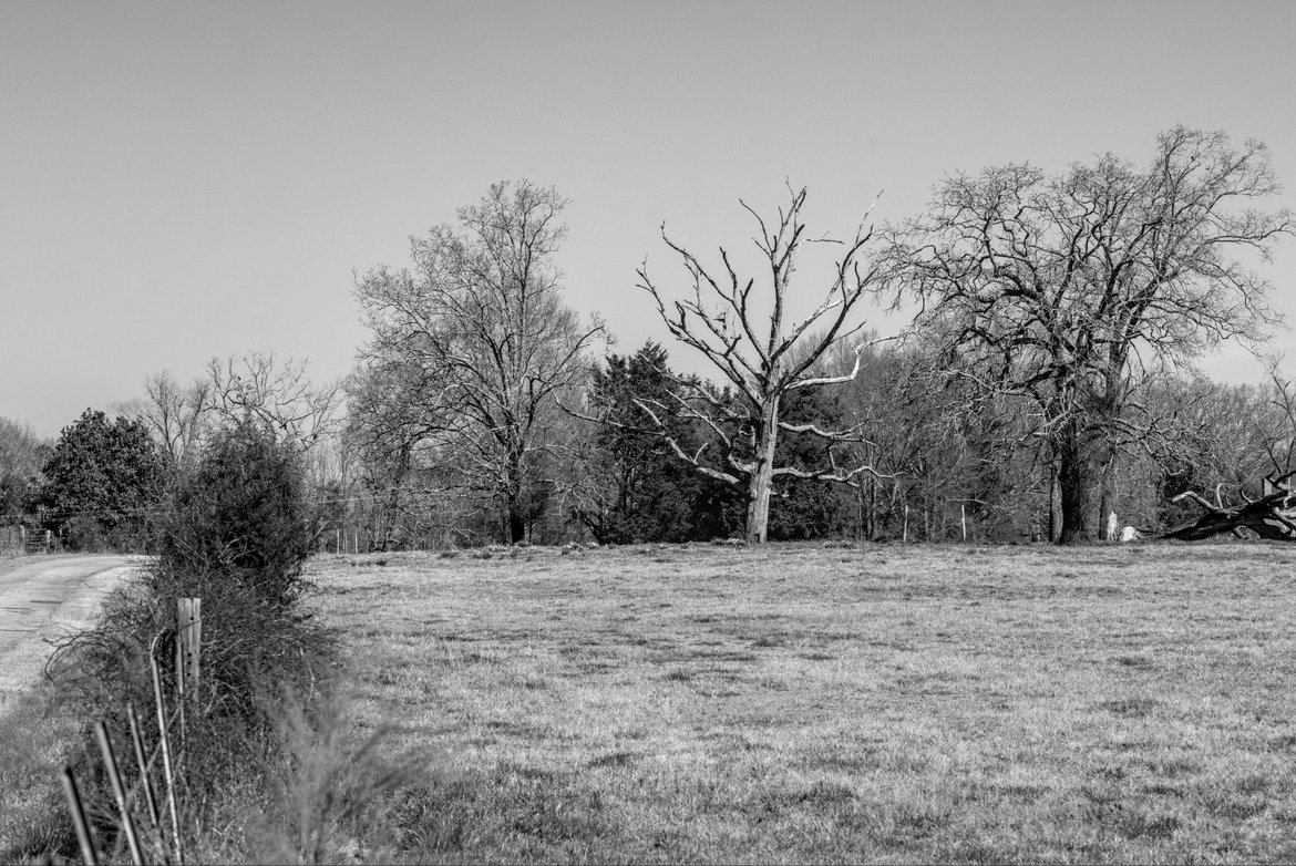 bare oak trees across a bare field photographed by luxagraf