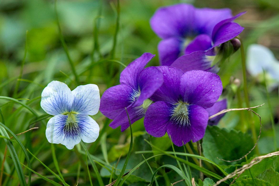 purple and white flowers photographed by luxagraf