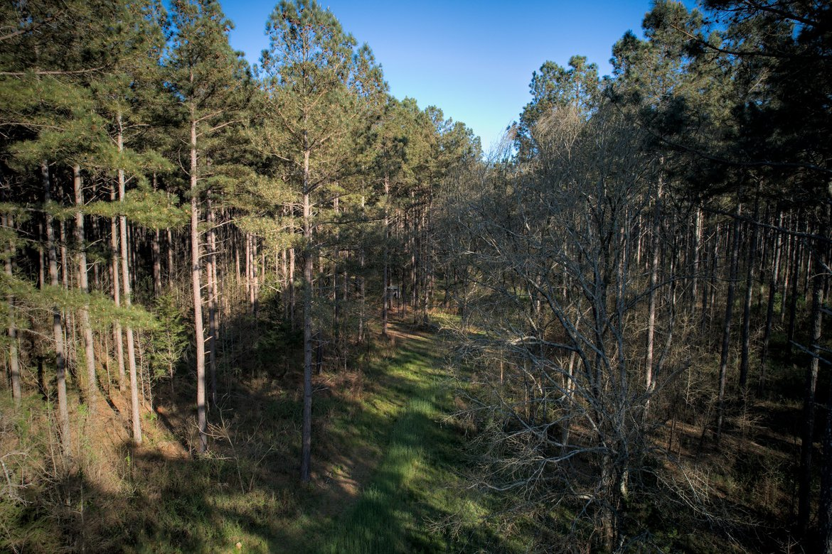 view of the pines photographed by luxagraf