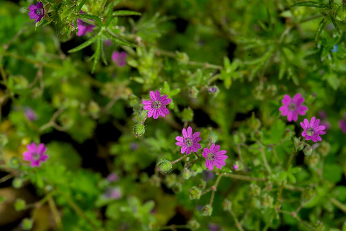 tiny purple flowers photographed by luxagraf