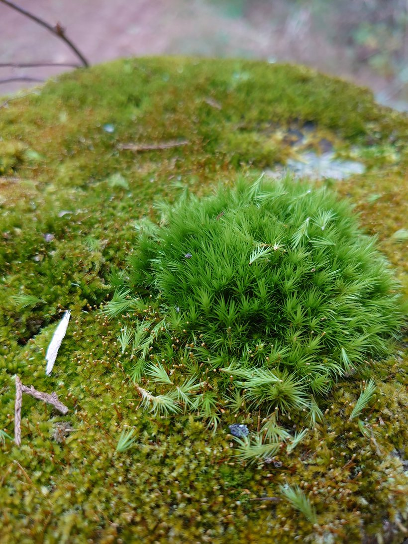 close up of moss photographed by luxagraf